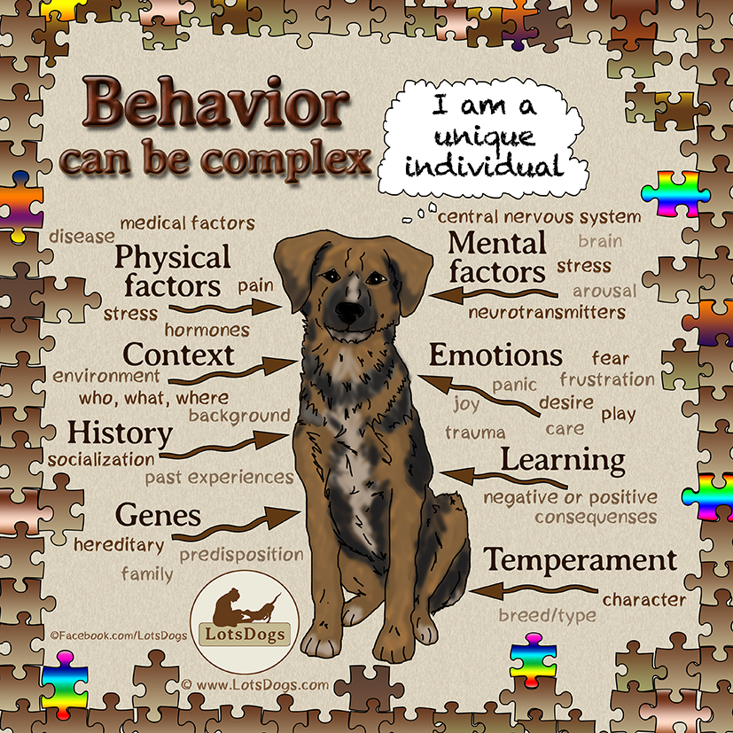Complexity of behavior